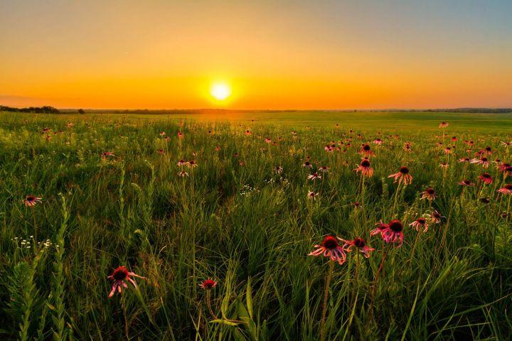 veld-zonsondergang.jpg